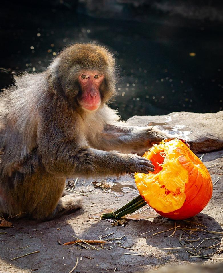 Zoo de Granby macaque