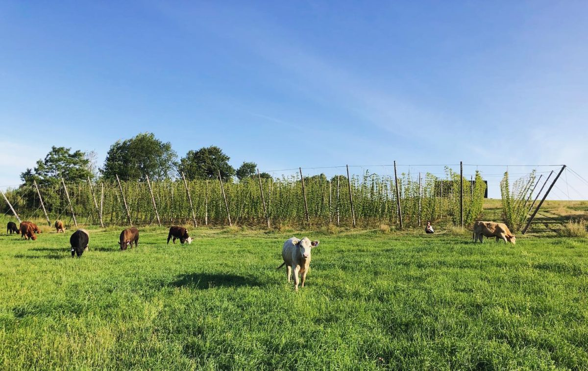 La Ferme – Brasserie Rurale