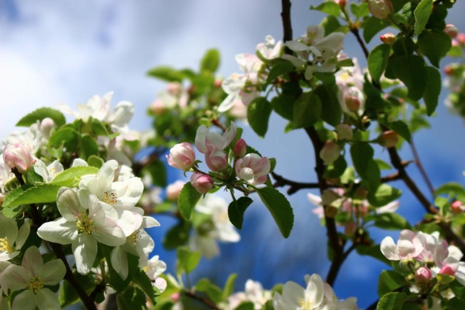 Cidrerie Autour de la pomme