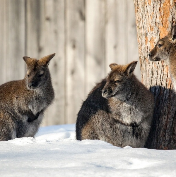 Zoo de Granby, animaux, plaisir, hiver, enfants, famille