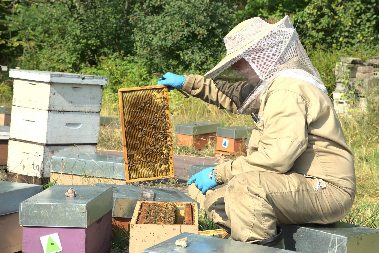 Miel Fontaine, extérieur, été, soleil, miel