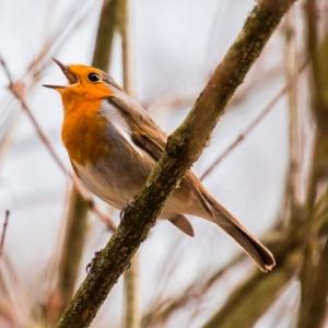 Des activités, en v'là !, CINLB, oiseaux, nature, plaisir, tranquillité
