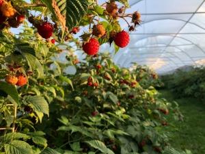aux ptits fruits_08