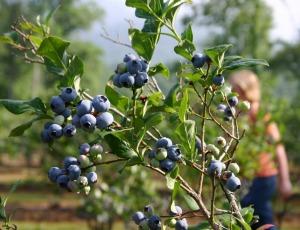 Les Petits Fruits Bio