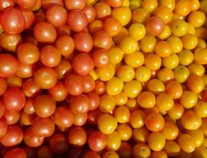les jardins biologique d'Osiris_tomates