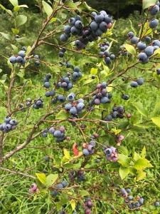 les petits fruits bio_03
